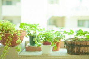 癒しの植物たち