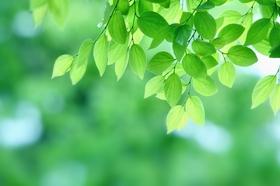 暑い日差しの中涼やかな緑