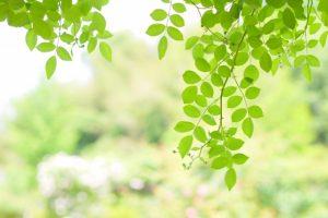 暑さを癒す緑