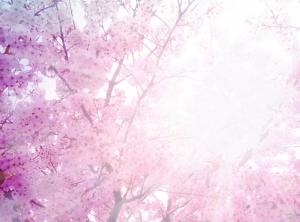 桜とお日さま